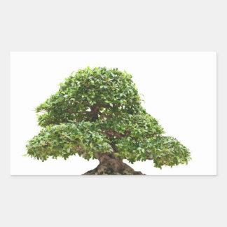 Bonsais del Ficus aislados Pegatina Rectangular