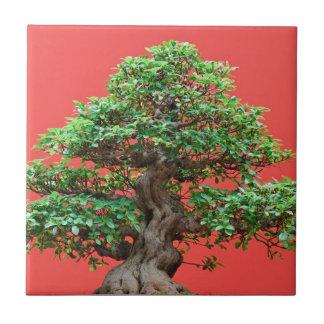 Bonsais del Ficus Azulejos Ceramicos