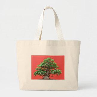 Bonsais del Ficus Bolsas