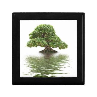 Bonsais del Ficus Caja De Joyas