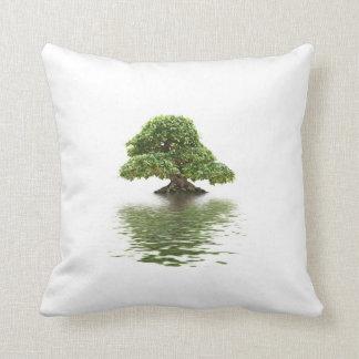Bonsais del Ficus Cojines