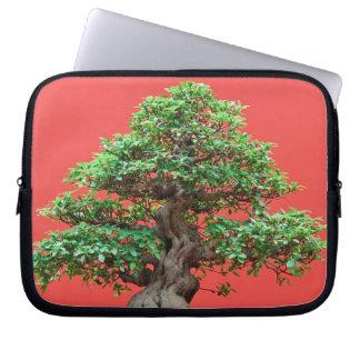 Bonsais del Ficus Funda Ordendadores