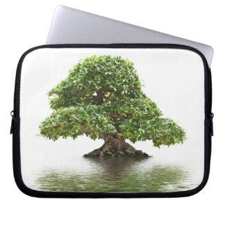 Bonsais del Ficus Manga Portátil