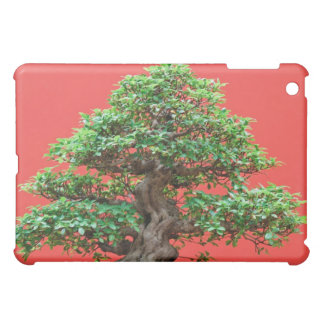 Bonsais del Ficus