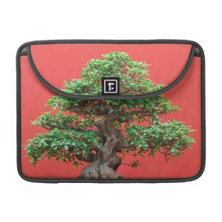 Bonsais del Ficus Fundas Para Macbooks