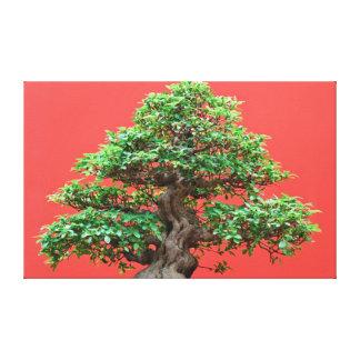 Bonsais del Ficus Lona Estirada Galerías