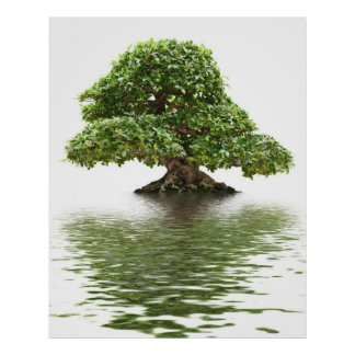 Bonsais del Ficus Poster