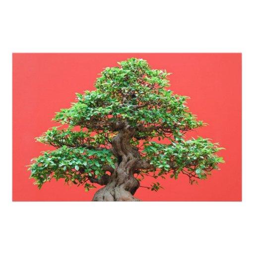 Bonsais del Ficus Papelería De Diseño
