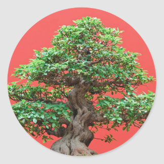 Bonsais del Ficus Pegatinas Redondas