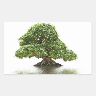 Bonsais del Ficus Pegatina Rectangular