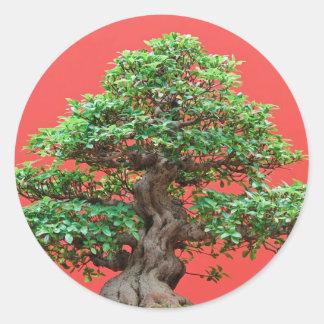 Bonsais del Ficus Pegatina Redonda