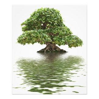 Bonsais del Ficus Impresiones Fotográficas