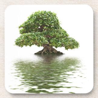 Bonsais del Ficus Posavasos De Bebida
