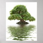 Bonsais del Ficus Póster