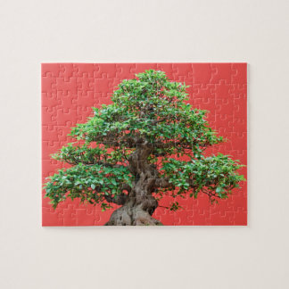 Bonsais del Ficus Rompecabeza