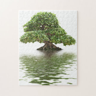 Bonsais del Ficus Puzzles Con Fotos
