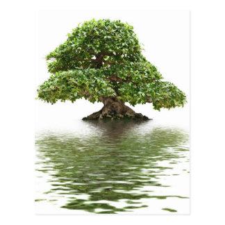 Bonsais del Ficus Tarjeta Postal