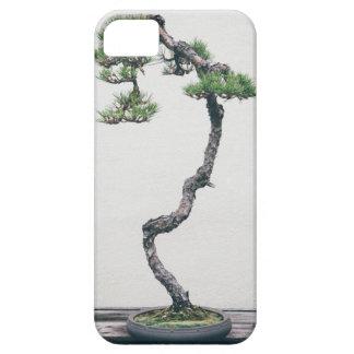 Bonsais del pino funda para iPhone SE/5/5s