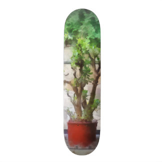 Bonsais en invernadero skate board