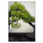 Bonsais japoneses del pino negro pizarras blancas