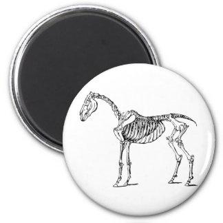 Bony Horse Fridge Magnets