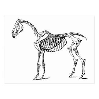 Bony Horse Postcard