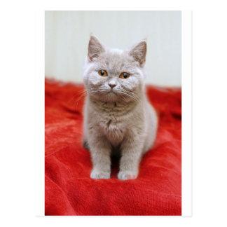 Boo Boo The Kitty Postcard