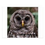 Boo - Owlwatch 2014 Owlet Postcard