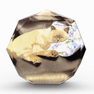 BooBoo the Siamese Cat Awards