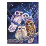 Boobook Owl Family Post Cards