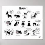 boston terrier, training, language, dogs, signals,