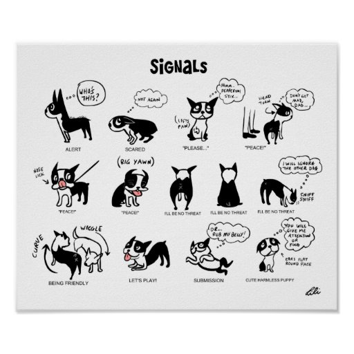 Boogie Signals by Lili Chin Print