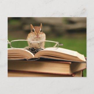 Cute studious chipmunk reading a book photo