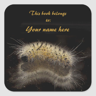 Bookplate de Caterpillar de mechón de la nuez dura Pegatina Cuadrada