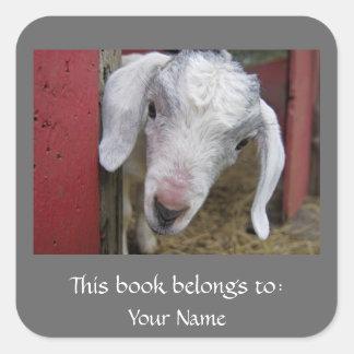Bookplate de la cabra del bebé colcomania cuadrada