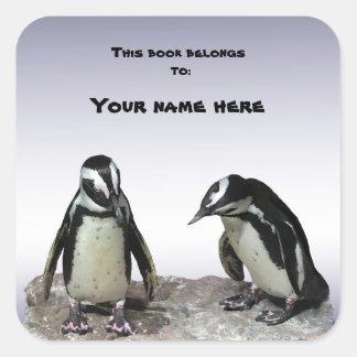 Bookplate de los pingüinos calcomanía cuadradase