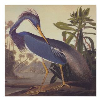 Bookplate del arte del vintage de Audubon de la Perfect Poster