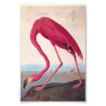 Bookplate rosado americano del vintage de Audubon Fotografía