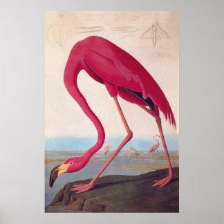 Bookplate rosado americano del vintage de Audubon Póster