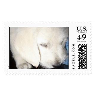 boomer dog stamp