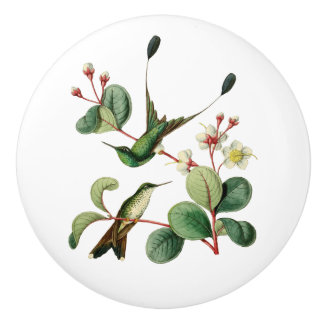 Booted Racket Tail Hummingbird Ceramic Knob