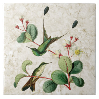 Booted Racket Tail Hummingbirds Ceramic Tile