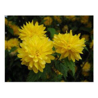 Boquet amarillo tarjeta postal