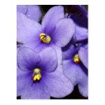 Boquet violeta postal