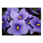 Boquet violeta tarjeta de felicitación