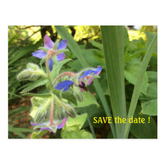 BORAGE Blue Pink Green --- SAVE the Date. Postcard