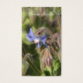 Borago officinalis blue flower close-up business card