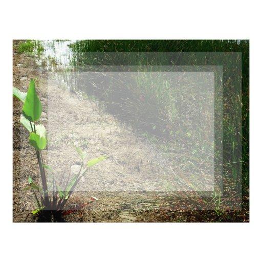 Borde de la caña de la charca y de la sola planta plantillas de membrete
