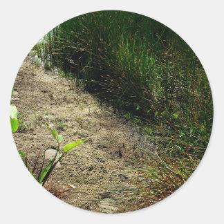 Borde de la caña de la charca y de la sola planta etiquetas redondas