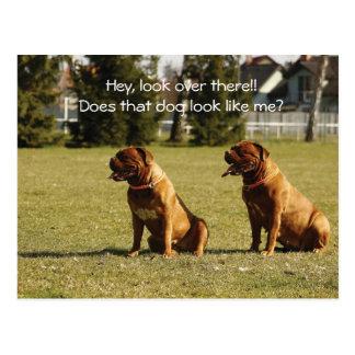 Bordeaux dogs postcard